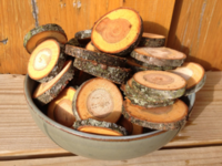 Forest_cut_wood_slices